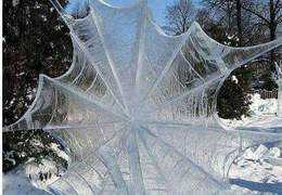 Frozen Spider Web: Photo by Denise Carbone