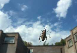 The very big bug: Photo by Ylona Golovin
